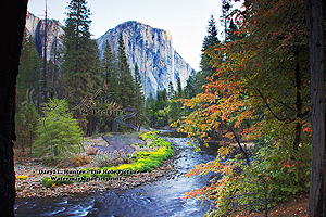 Yosemite autumn, fall colors, red leaves, yellow leaves, merced river, el capitan, yosemite valley